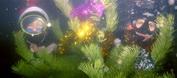 Псков Подводный Мир празднует Новый Год под водой.